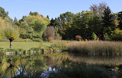 My Little Paradise (AnyMotion) Tags: pont teich trees bäume meadow wiese reflection spiegelung landscape landschaft landschaftsaufnahmen 2019 botanischergarten frankfurt frankfurtwestend plants pflanzen anymotion colours colors farben green grün 7d2 canoneos7dmarkii autumn fall herbst automne otoño