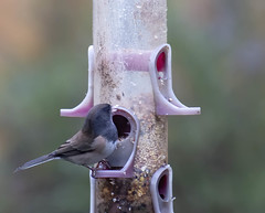 2020-01-06 Lunchtime! (Mary Wardell) Tags: bird avian feeder lunchtime small