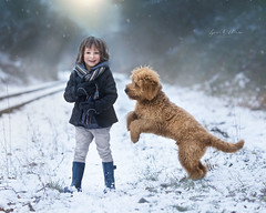 Fun with Wilbur (Lynne Williams Photography in Wales) Tags: boy dog golden doodle puppy pup fun snow winter wales childhood love playtime goldendoodle dreambig
