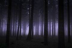 Like in the story (Petr Sýkora) Tags: les mlha podzim forest trees dark fog mist nature autumn bleak czech