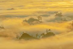_MG_6264.0212.Tân Lập.Mộc Châu.Sơn La (hoanglongphoto) Tags: asia asian vietnam northvietnam northernvietnam northwestvietnam landscape scenery vietnamlandscape vietnamscenery mocchaulandscape nature naturelandscape sunrise clouds mountain flanksmountain vietnammountainouslandscape cloudsofmocchau canon canoneos5dmarkii canonef100400mmf4556lisusm tâybắc sơnla mộcchâu tânlập thiênnhiên thiênnhiênmộcchâu natureinmocchau bìnhminh bìnhminhmôcchâu mây mâymộcchâu núi sườnnúi phongcảnhvùngnúi topmountain dãynúi đỉnhnúi mâyluồnmộcchâu forest theforest rừng hoanglongphoto