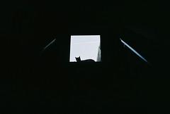 (Boris Kirov Young.Bloods) Tags: kodak colorplus200 batman cat 35mm amsterdam