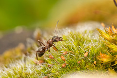 My little world (rgr1511) Tags: macro ant animal nature