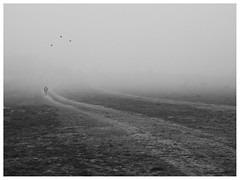 Salir de la niebla (una cierta mirada) Tags: bnw blackandwhite fog foggy mist path nature birds road man outdoors winter
