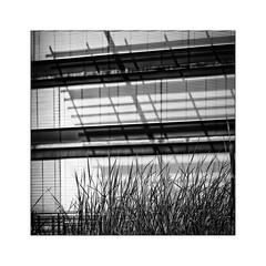 growing grass (Armin Fuchs) Tags: arminfuchs square lavillelaplusdangereuse würzburg niftyfifty stripes grass shadows diagonal