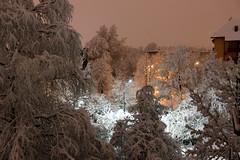 Winter Night (JULIANA LEFTEROVA) Tags: crazytuesday winter winterscene snow streetphotography urbanexploring urbanscape streetlights trees night snowing