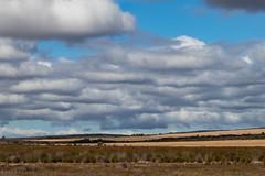 What were the skies like... (Ballacorkish) Tags: buffalo capebuffalo secretarybird nuwejaarswetlandssma capeagulhas 6000 6000coza ballacorkish
