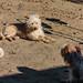 Dirt Dogs Before Grass 01