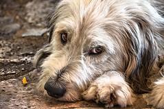Adorable! (Κostas GR) Tags: dog adorable