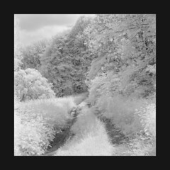 Summer day whitescale / O bielach dnia letniego (Piotr Skiba) Tags: wojkowice infrared ir seagull4a rolleiir400 landscape road trees grass nettle summer tlr square film bw poland pl piotrskiba