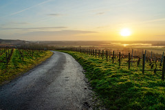 Winter morning (ZeGaby) Tags: champagne hdr landscape marne naturephotography paysage paysagedechampagne pentax2470mm pentaxk1 road sunrise vignes vignoble vines vineyards aÿchampagne france