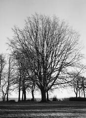 Springforbi Strandpark (Lars_Holte) Tags: pentax 645 pentax645 645nii 6x45 smcpentaxfa 75mm f28 120 film 120film analog analogue foma fomapan200 200iso caffenolcm mediumformat blackandwhite classicblackwhite bw monochrome filmforever filmphotography ishootfilm larsholte homeprocessing danmark denmark springforbi dyrehaven trees