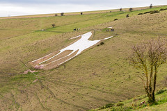 Alton Barnes White Horse (Keith now in Wiltshire) Tags: whitehorse altonbarnes wiltshire england chalk downs milk hill figure carving hillside grass tree