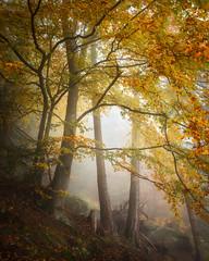 Foggy Forest (philipslotte1) Tags: photography landscape fog foggy misty mist dolomites dolomiti dolomitiamo italia italy nature woodlands woods forest woodland travel europe autumn fall
