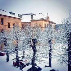 L a d y       Winter (helen_flow ♡) Tags: myverses poet city insidewarm outdoorcold words