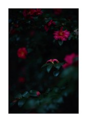 This work is 17/21 works taken on 2019/12/1 (shin ikegami) Tags: sony ilce7m2 a7ii sonycamera 50mm lomography lomoartlens newjupiter3 tokyo 単焦点 iso800 ndfilter light shadow 自然 nature naturephotography 玉ボケ bokeh depthoffield art artphotography japan earth asia portrait portraitphotography