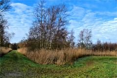 landscape...... (atsjebosma) Tags: landscape landschap trees bomen clouds wolken bluesky berken riet january atsjebosma groningen thenetherlands 2020 coth5 sunrays5 ngc npc