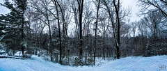 2020.01.07.0607 First Snow (Brunswick Forge) Tags: grouped 2020 virginia outdoor outdoors winter day cloudy botetourtcounty nature woods forest tree trees iphone iphone11 panorama pano snow weather stormyweather air sky