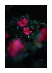 This work is 16/21 works taken on 2019/12/1 (shin ikegami) Tags: sony ilce7m2 a7ii sonycamera 50mm lomography lomoartlens newjupiter3 tokyo 単焦点 iso800 ndfilter light shadow 自然 nature naturephotography 玉ボケ bokeh depthoffield art artphotography japan earth asia portrait portraitphotography