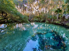 Secret Spring (paulgarf53) Tags: springsfloridanaturewaterenvironmentreflectiontreesiphone