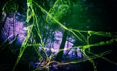 Forest of the Trees (Crusty Da Klown) Tags: canada britishcolumbia bc forest trees fog green purple nature outside outdoors bush film canon contrast tones lighting shadows mood texture colors
