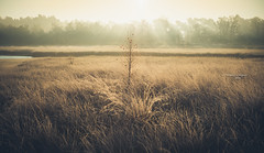 Knowing how to be solitary is central to the art of loving (Ingeborg Ruyken) Tags: ochtend morning sunrise 500pxs natuurmonumenten boxtel natuurfotografie autumn fall kampina herfst