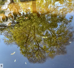 Reflejo de árbol en el agua (In Dulce Jubilo) Tags: naturaleza nature trees arbol reflejos reflections agua water espejo lago lake andalucia andalusia sierramorena espagne españa spanien spain fotografía photography