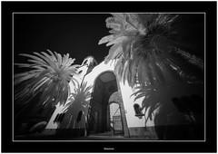 Los Sauces, Isla de La Palma, Canary Islands (Bartonio) Tags: bw canaryislands ir islascanarias lapalma lossauces places sonya7ir blanconegro infrared laowa1018mm45 modified
