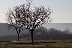 Paysage hivernal - Winter landscape (Gisou68Fr) Tags: arbres trees hiver winter paysage landscape champs fields janvier january 2020 68 hautrhin grandest alsace france tagsdorf