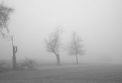 ...Ferdinand und Paul... (shallowcreek) Tags: winter nebel fog natur nature landschaft landscape blackandwhite baum tree
