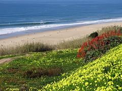 Jeu de couleurs (Armelle85) Tags: extérieur nature paysage plage mer océan rivage sable fleurs flore couleurs nazaré portugal