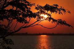 Amanecer en Iberá (Ce Rey) Tags: amanecer sunrise sun sol silueta silhoutte iberá corrientes argentina nature naturaleza outdoor árbol tree