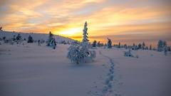 Lovely Lapland (ikkasj) Tags: lapland felllapland fell finland winter snow outdoors outside nature innature polarnight kaamos