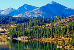 Land of the Pine, Upper Yosemite NP 2018 (inkknife_2000 (11 million views)) Tags: easternsierranevada yosemitenationalpark california usa landscapes mountains dgrahamphoto rocks spring granite granitedomes skyandclouds fluffyclouds wetlands meadow fallentrees waterreflection serenity alonewithnature pines forests mountainpeaks