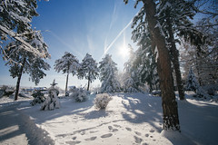 Forest covered with snow with sunlight over it. Park in Petrovac na Mlavi.