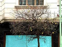 Vilagarcía de Arousa (carolus_croque) Tags: árboles árbol