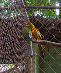 Love [Pt. II] (fedech_) Tags: sony sonyalpha sonya7 zoo beauty bellezza parrots pappagalli nature natura zeiss zeisscameralenses brasile brazil