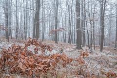 Raureif und Nebel im Wald (AnBind) Tags: waldhof motive meinegegend nebel winter orte raufreif jahreszeit 2020 wald egelsee forest woods fog hoarfrost myregion