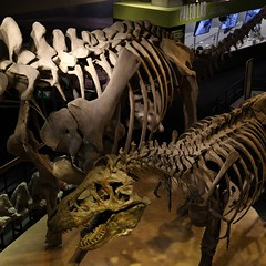 large Laboratories and museums (MoparMadman63) Tags: paleontology laboratory dinosaur skeleton fossil display exhibit museum history science perotmuseum dallastx downtown