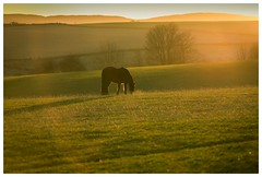 Pony in the sun (jamesdewar99) Tags: light landscape sun fields hills green colour goldenhour animal horse backlit outdoors explored photography sunlight