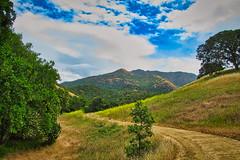 Donner Creek Loop Trail, Mt. Diablo State Park (greensteves) Tags: mtdiablo clayton landscape donnercreek steve canonpowershot trees trail grass hills mountains