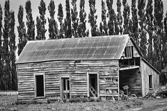 N.Z. Timber & Tin (gecko47) Tags: building house abandoned derelict empty bw monochrome luminar4 wellington aotearoa newzealand heritage windbreak