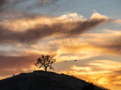 Tonights Sky (Eric Zumstein) Tags: oaktree westhills california unitedstatesofamerica