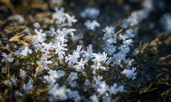 Small Worlds (Christoph Wenzel) Tags: makro tamron2875mmf28diiiirxd sonyalpha7riii ratscher thüringerwald thrüringen winter natur deutschland schleusingen thüringen