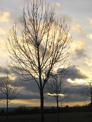 Wie schön leuchtet der Morgenstern (amras_de) Tags: sylterstrase wiesbaden dotzheim sauerland baum træ stablo boom árbol drvo arbre strom tree arbo puu zuhaitz crann fa arbore tré albero arbor medis koks tre drzewo árvore àrvulu abend vespre vecer aften evening vespero ilta vespere sera vesper vakaras avond kveld seara forenicht kväll aksam sonnenuntergang escureixito ocàs soumrak solnedgang sunset ocaso päikeseloojang auringonlasku coucherdesoleil zalazaksunca tramonto soloccidens saulelydis riets zonsondergang soleglad zachódslonca pôrdosol apus scurata dayset západslnka solnedgång