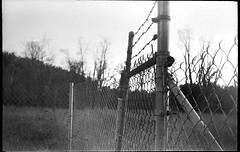wire fence, barbed wire, winter landscape, dusk, Asheville, NC, Kodak Retina IIIc, Kodak Tri-X 400, Moersch Eco developer, 1.7.20 (steve aimone) Tags: wirefence barbedwire winterlandscape asheville northcarolina kodakretinaiiic retina kodaktrix400 moerschecofilmdeveloper 35mm 35mmfilm film blackandwhite monochrome monochromatic dusk