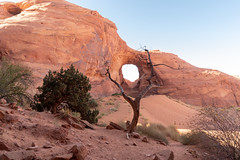 Natural Arch Framed by Tree (Eric Kilby) Tags: monumentvalley earofthewind natural arch sandstone tree