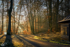 Waldspaziergang (Nordseher) Tags: no people outdoors nature tree forest day tranquility woodland beauty in scenics naturetranquilscene landscapescenery treetrunk nonurbanscene