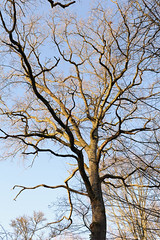 Tentacules (patoche21) Tags: europe dxo bourgogne arbre cotedor chevignystsauveur bourgognefranchecomte france nature plante paysage forêt flore ambiance branche contreplongée graphisme light tree forest landscape daylight flora burgundy patrickbouchenard