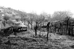 beautiful appareance (sandrorotonaria) Tags: fiat 1100 ciociaria field car sephia landscape